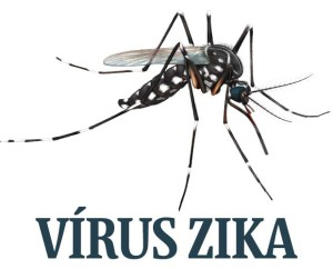Mosquito Transmissor do Viris Zika